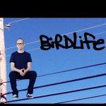 AronMiller Birdlife 01 150x150 - Welcome